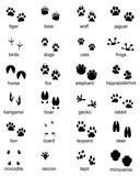 Set of footprints of wild animals, illustration of black silhouette