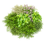 Fresh herbs isolated white background Basil rosemary thyme Top view - 211548221