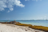 Punta Cana, Dominican Republic - June 17, 2018: : sargassum seaweeds on ocean beach in Bavaro, Punta Cana. Due to global warming, the altered ocean current bring sargasso to Dominican Republic coast. - 211566029