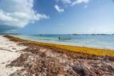 Punta Cana, Dominican Republic - June 17, 2018: : sargassum seaweeds on ocean beach in Bavaro, Punta Cana. Due to global warming, the altered ocean current bring sargasso to Dominican Republic coast. - 211566056