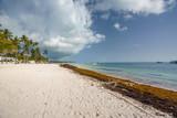 Punta Cana, Dominican Republic - June 17, 2018: : sargassum seaweeds on ocean beach in Bavaro, Punta Cana. Due to global warming, the altered ocean current bring sargasso to Dominican Republic coast. - 211566070
