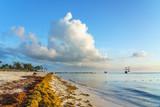 Punta Cana, Dominican Republic - June 17, 2018: : sargassum seaweeds on ocean beach in Bavaro, Punta Cana. Due to global warming, the altered ocean current bring sargasso to Dominican Republic coast. - 211566217