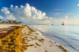 Punta Cana, Dominican Republic - June 17, 2018: : sargassum seaweeds on ocean beach in Bavaro, Punta Cana. Due to global warming, the altered ocean current bring sargasso to Dominican Republic coast. - 211566262