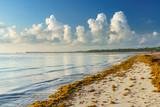 Punta Cana, Dominican Republic - June 17, 2018: : sargassum seaweeds on ocean beach in Bavaro, Punta Cana. Due to global warming, the altered ocean current bring sargasso to Dominican Republic coast. - 211566268