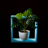 Composition of a blue wooden frame and a green monstera plant in a flowerpot on a dark background - 211569459
