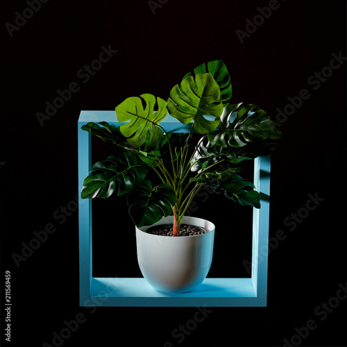 Composition of a blue wooden frame and a green monstera plant in a flowerpot on a dark background