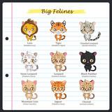Big feline illustrations with regular and scientific names