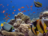 Tropical fishes and corals reef in ocean - 211575661