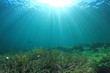 Leinwanddruck Bild - Underwater sea grass and blue ocean