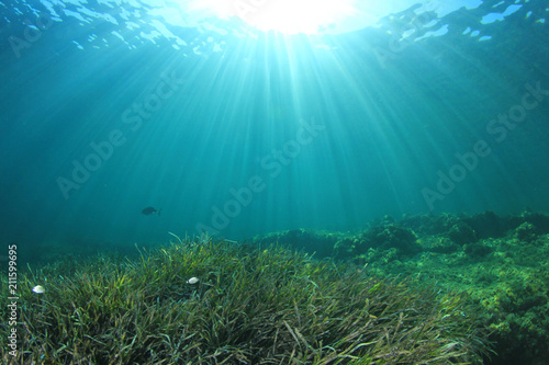 Leinwanddruck Bild Underwater sea grass and blue ocean
