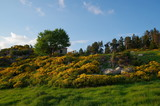 Refuge de montagne avec des fleurs jaunes