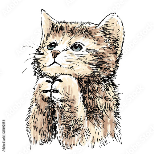 dziecieco-slodki-kotek
