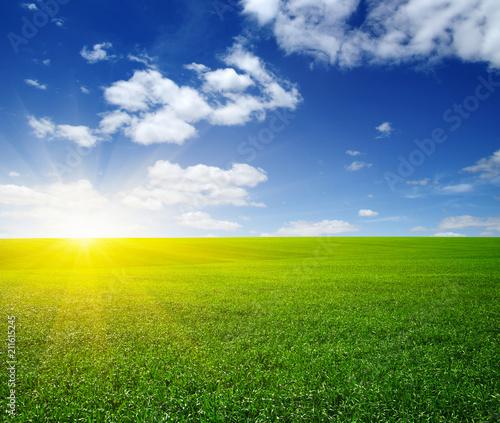 Leinwanddruck Bild Green meadow under sun