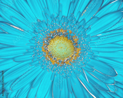 Aluminium Gerbera cyan yellow cerbera flower closeup. Macro background. It can be used in website design and printing.