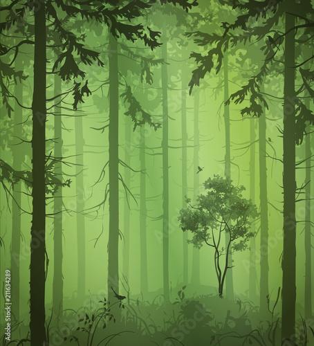 zielone-drzewa