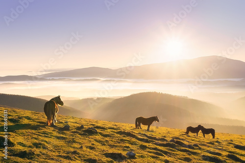 Fotobehang Paarden horses in the mountain at sunset