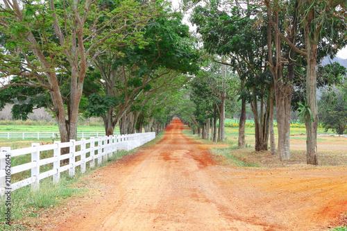 Fotobehang Zomer Rural soil way to summer forest.