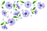 Blue cornflower isolated on white background with copy space for your text. Top view. Flat lay pattern