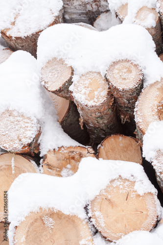 Trees for forestry in winter - 211665824