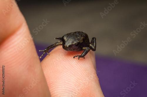 Fotobehang Kikker Macro Tiny Frog
