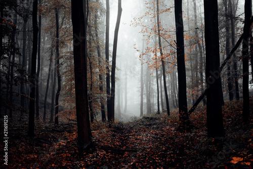 Fototapeta Dunkler herbstlicher Wald mit Nebel