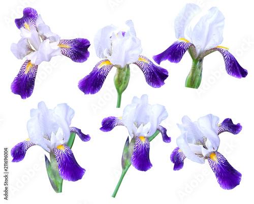 Fotobehang Iris iris on white background