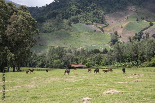 Aluminium Pistache meadow with horses grazing in Panama
