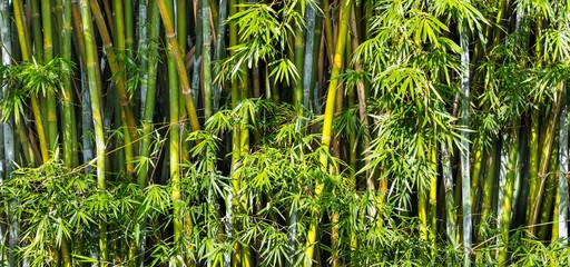 Fundo com bambus