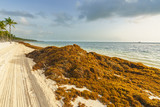 Punta Cana, Dominican Republic - June 25, 2018: : sargassum seaweeds on ocean beach in Bavaro, Punta Cana. Due to global warming, the altered ocean current bring sargasso to Dominican Republic coast. - 211716201