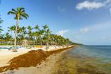 Punta Cana, Dominican Republic - June 25, 2018: : sargassum seaweeds on ocean beach in Bavaro, Punta Cana. Due to global warming, the altered ocean current bring sargasso to Dominican Republic coast. - 211716210