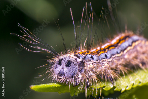 colorful caterpillar on green nettle leaf in the beautiful nature - 211721663