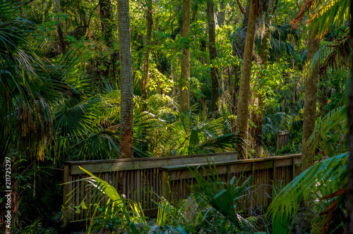 A small wooden bridge in a tropical park. In the center of the frame is sunlight.