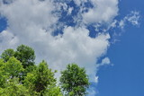 white Cumulus clouds on a blue sky background crown of green trees