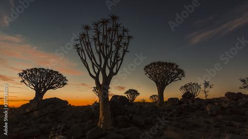 Fotobehang Zwart Köcherbaumwald, Namibia