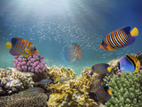 Beautiful colorful coral reef and tropical fish underwater - 211736680