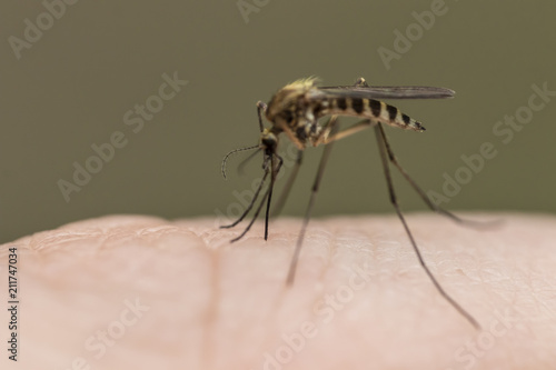 A Mosquito Close up on Skin - 211747034