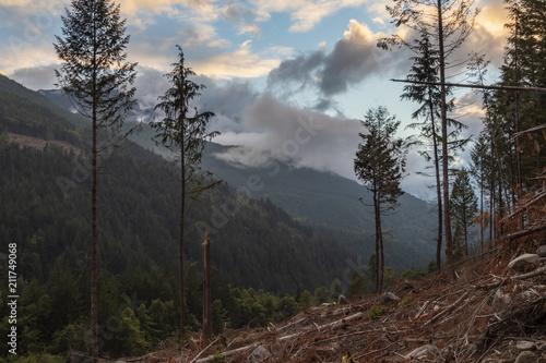 Aluminium Chocoladebruin Beautiful BC Mountain and Forest Landscape in Logging Cut