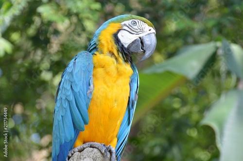 Fototapeta Parrot Bird