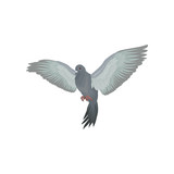 Grey urban pigeon with outstretched wings vector Illustrations on a white background - 211755483