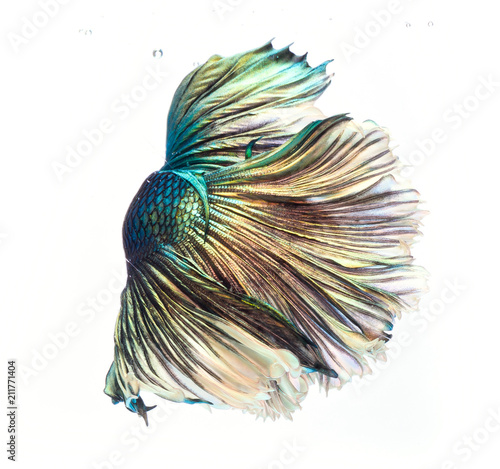 Fotobehang Pauw Halfmoon betta fish, siamese fighting fish, Capture moving of fish, abstract background of fish tail