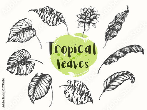 Fototapeta Summer tropical floral design elements.