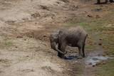 Elephant safari tanzanie - 211780438