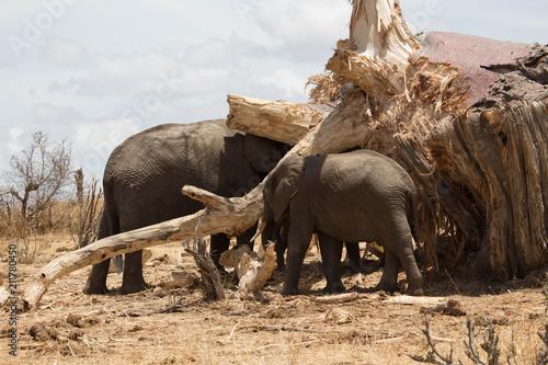 Fotobehang Neushoorn Elephant safari tanzanie