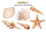 Watercolor set of underwater life objects - various tropical seashells and starfish. Hand drawn illustrations isolated on white background. - 211785428