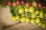 fresh gooseberries close up in the detail - 211794432