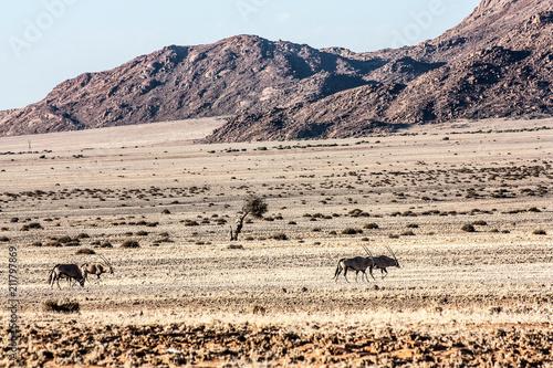 Fotobehang Wit Namibian Landscapes