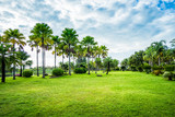Green grass field with palm tree in Public Park - 211799886