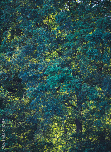 Patterns in foliage of summer trees. - 211801459