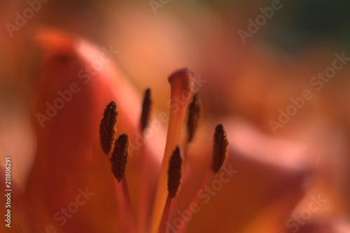 цветы - 211806291