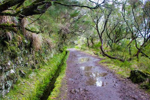Fotobehang Lavendel Risco Waterfall